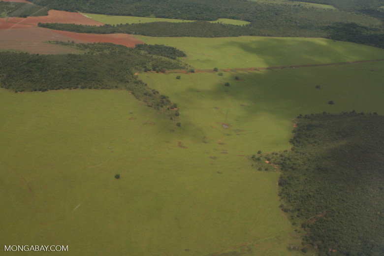 Cattle pasture and transition forest