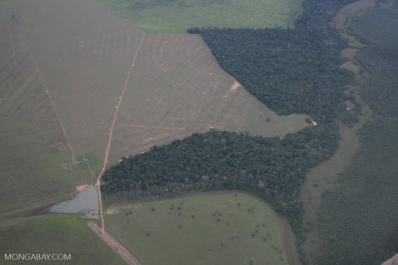 Clearing of Amazon forest for pasture or soy [brasil_115]