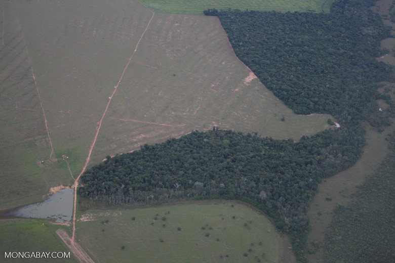 Clearing of Amazon forest for pasture or soy [brasil_116]