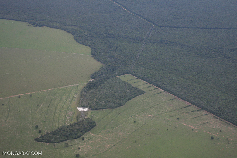 Clearing of Amazon forest for pasture or soy [brasil_121]