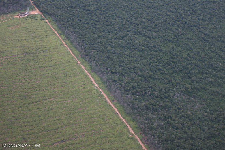 Clearing of Amazon forest for pasture or soy [brasil_123]