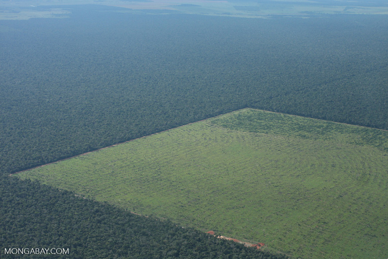 Clearing of Amazon forest for pasture or soy [brasil_127]