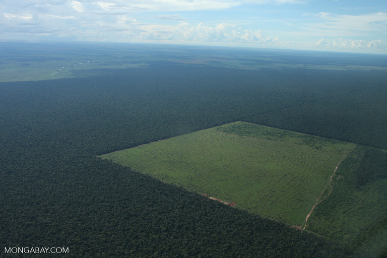 Clearing of Amazon forest for pasture or soy