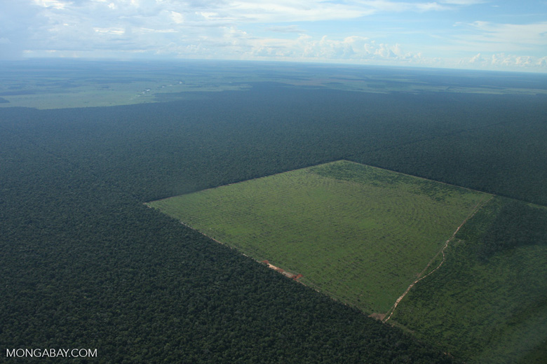 Clearing of Amazon forest for pasture or soy [brasil_129]