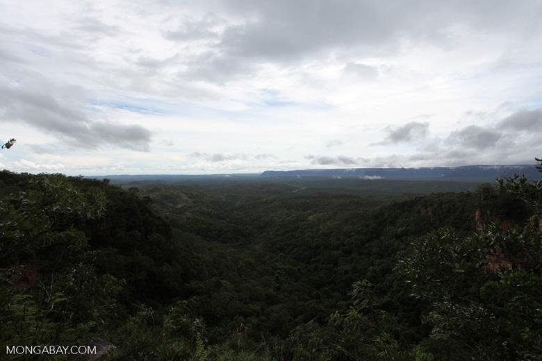 Cerrado seen from Chapada [brazil_0022]