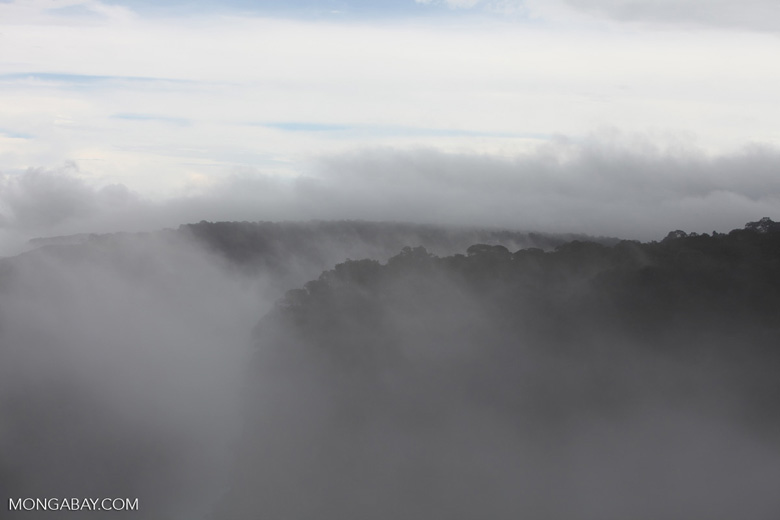 Forested plateau (through the mist)