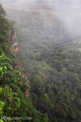 Forested cliffs at Chapada (through the mist)