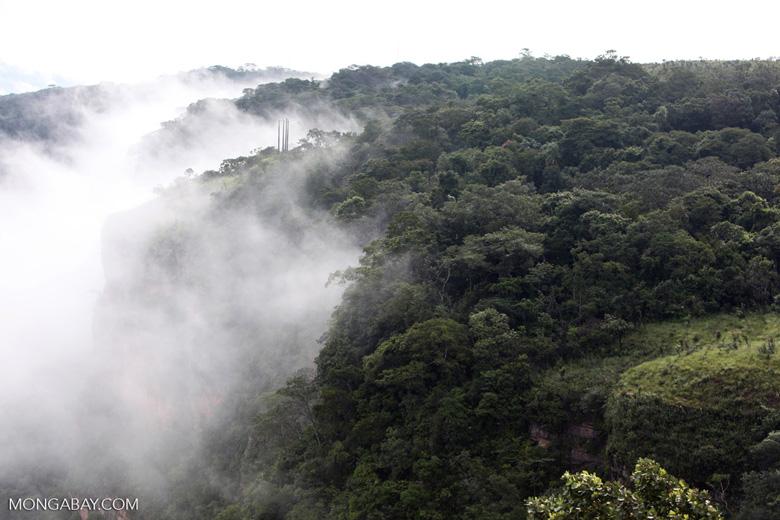 Forest in Chapada