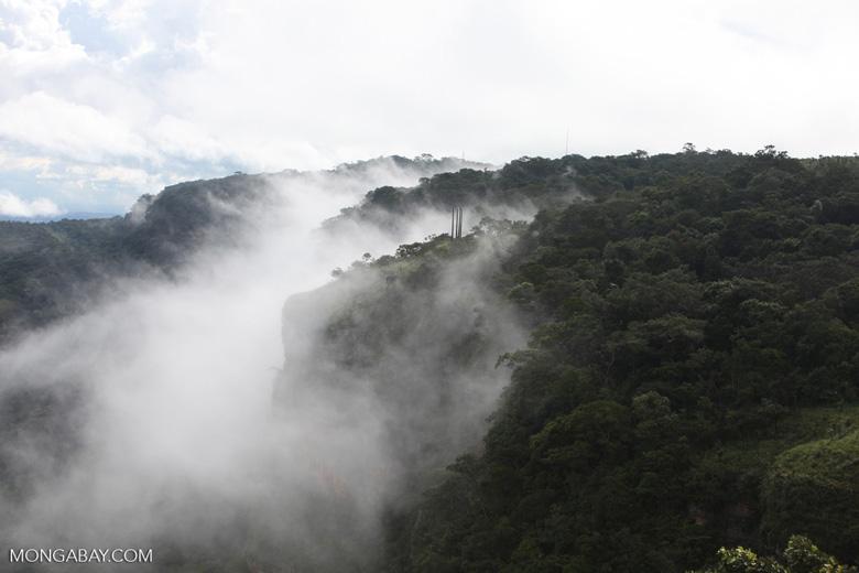 Forest in Chapada [brazil_0086]