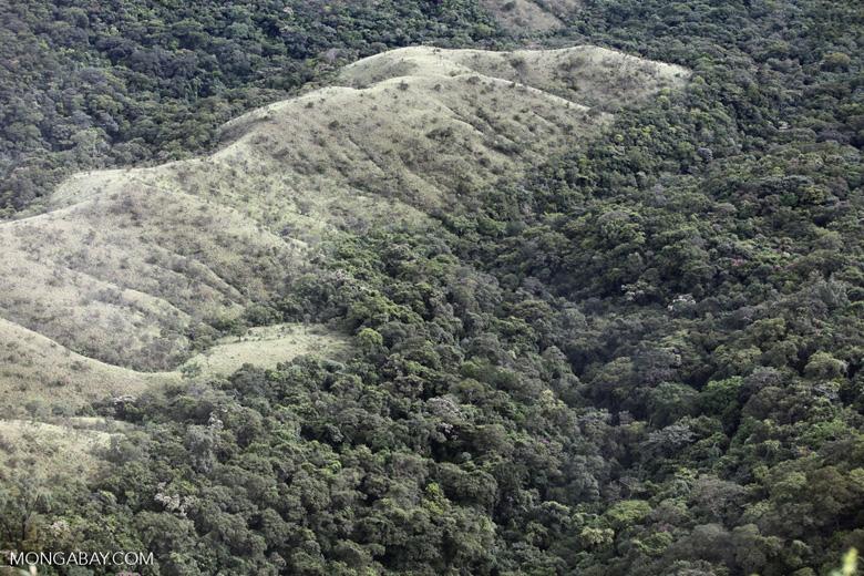 Forest clearing near Chapada