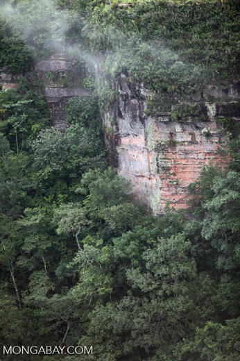Forested cliffs at Chapada [brazil_0090]