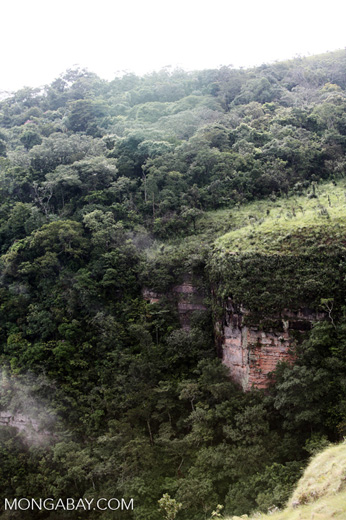 Forested cliffs at Chapada [brazil_0091]