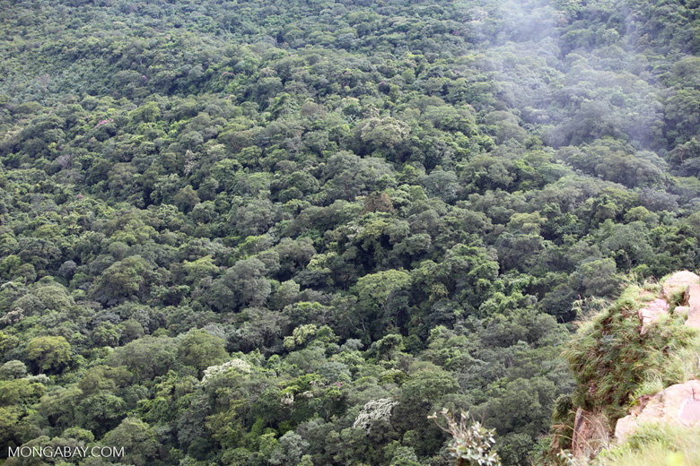 Amazon transition forest
