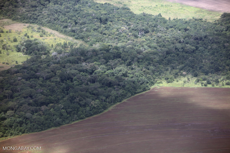 Aerial view of new cerrado/transition forest clearing