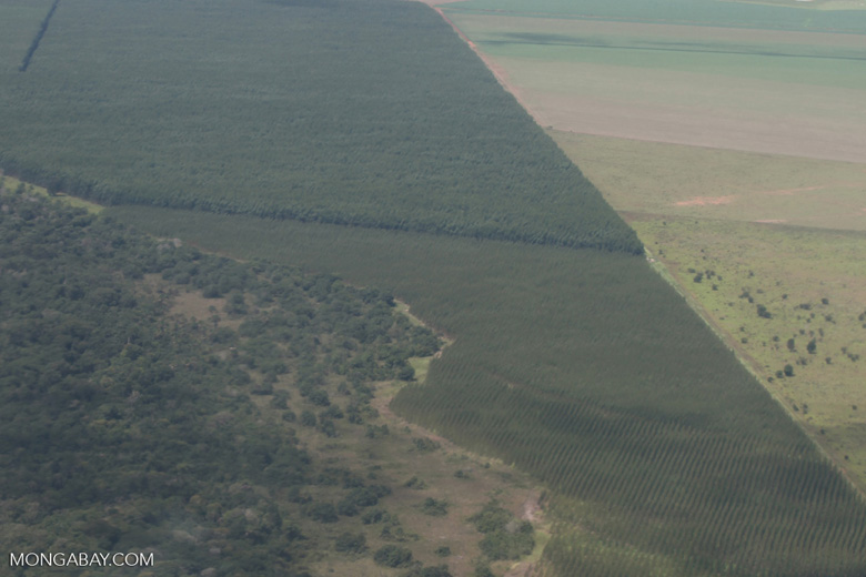 Tree plantations and cerrado in the southern Amazon [brazil_0230]