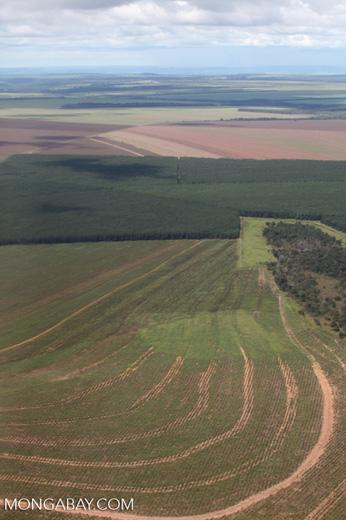 Tree plantations and cerrado in the southern Amazon
