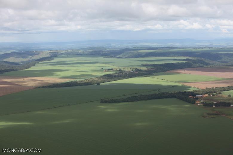 Extensive soy fields in the Brazilian Amazon
