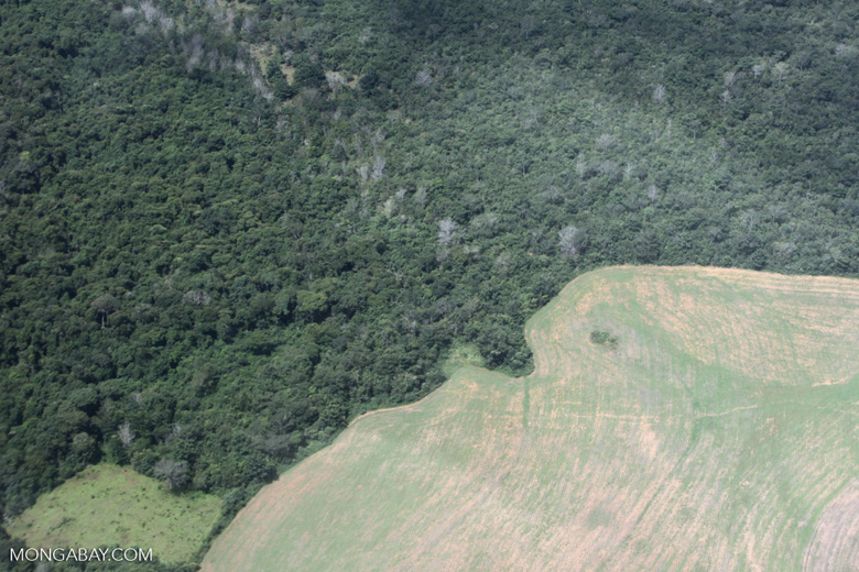 An overhead view of forest in the Amazon adjacent to land cleared for agriculture.