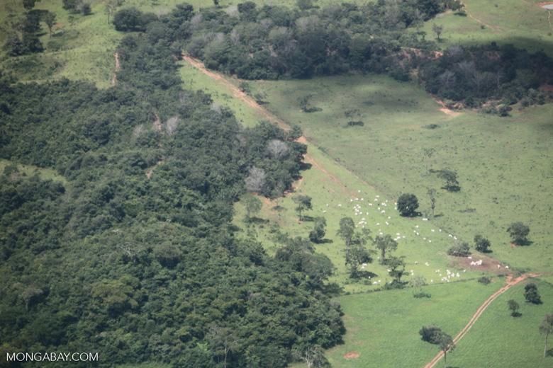 Cattle ranching in the Brazilian Amazon [brazil_0287]