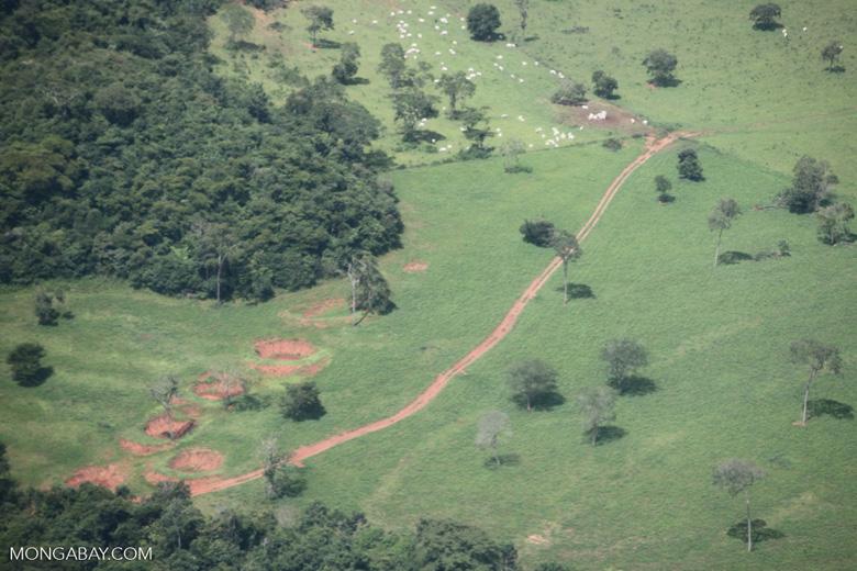 Cattle ranching in the Brazilian Amazon [brazil_0288]