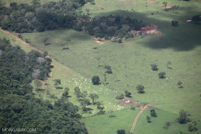 Cattle ranching in the Brazilian Amazon