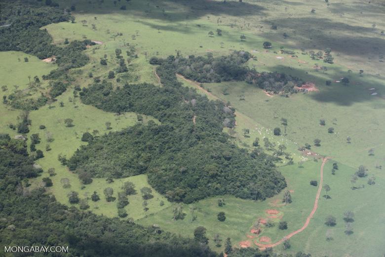 Cattle ranching in the Brazilian Amazon [brazil_0290]