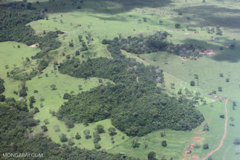Cattle ranching in the Brazilian Amazon [brazil_0291]