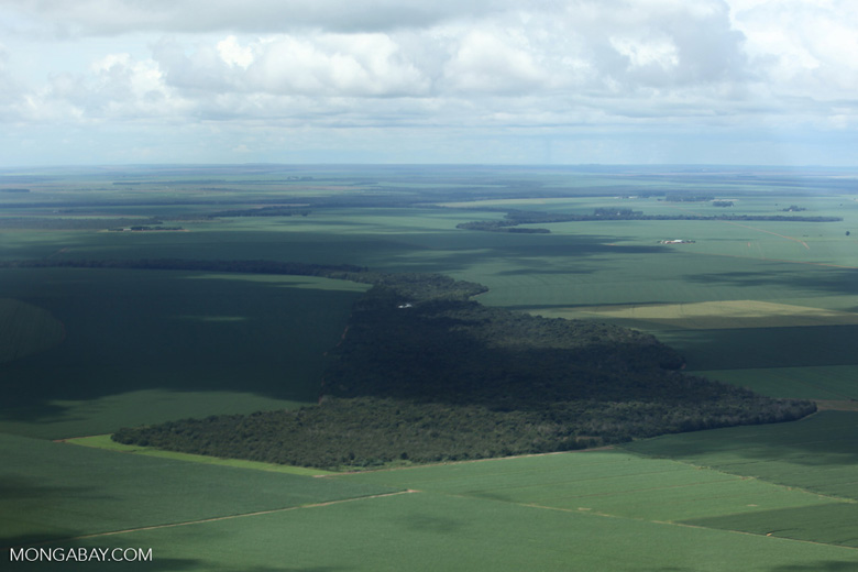 Soy and forest fragments: the new landscape of the southern Amazon