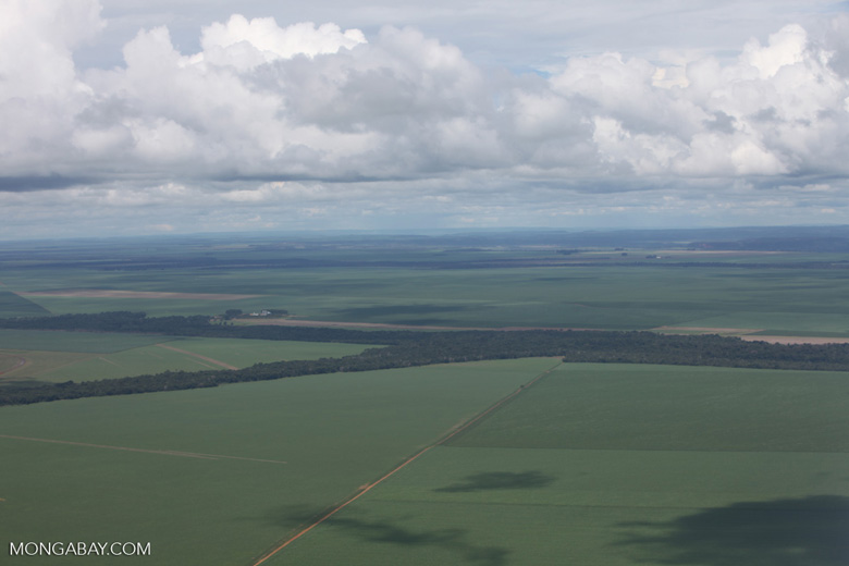 Soy and forest fragments: the new landscape of the southern Amazon [brazil_0297]