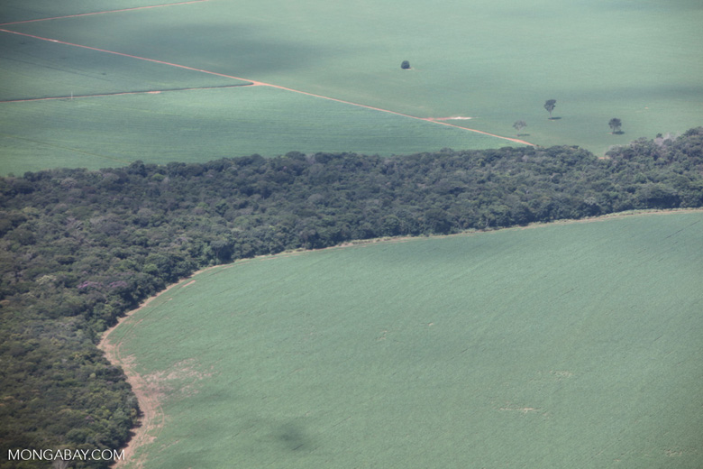 Soy and Amazon forest in Brazil