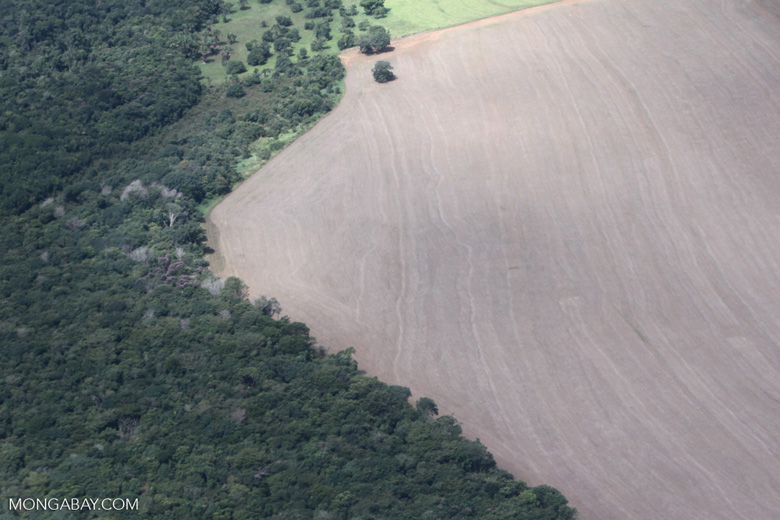 Stark contrast between forest and land cleared for soy