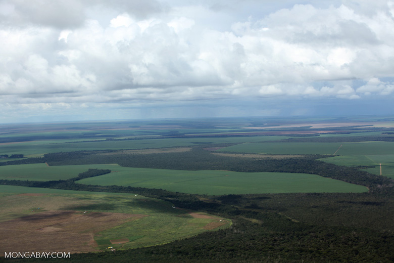 Legal forest reserves and large-scale soy farms