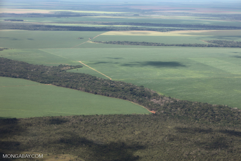 Soy and Amazon transition forest