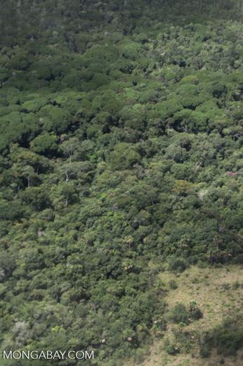 Cerrado-rainforest transition zone [brazil_0354]