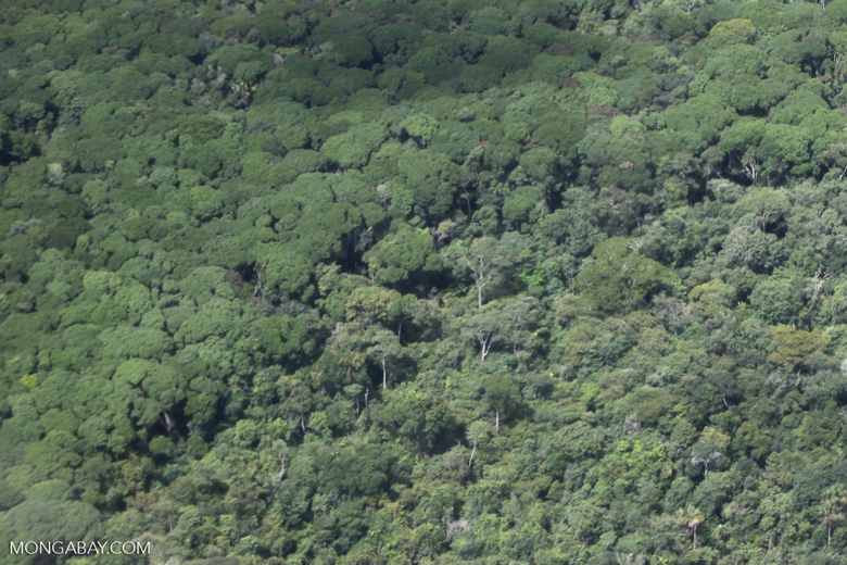 Transition between logged and healthy rainforest