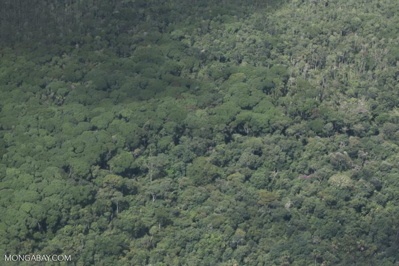 Cerrado-rainforest transition zone