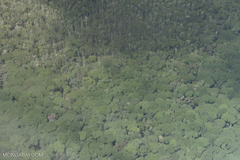 Cerrado-rainforest transition zone [brazil_0359]