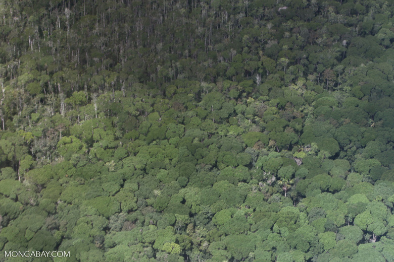 Cerrado-rainforest transition zone [brazil_0361]