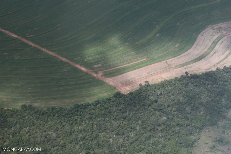 Forest clearing in the southern Amazon