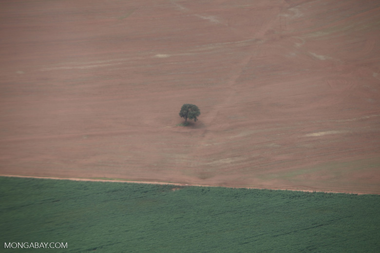 Solitary tree in the middle of a soy field [brazil_0384]
