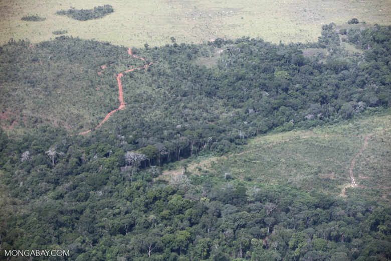 Forest degraded by fire in the Brazilian Amazon