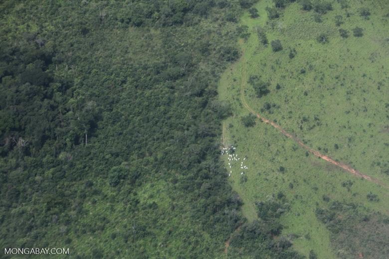 Forest degraded by fire in the Brazilian Amazon [brazil_0437]