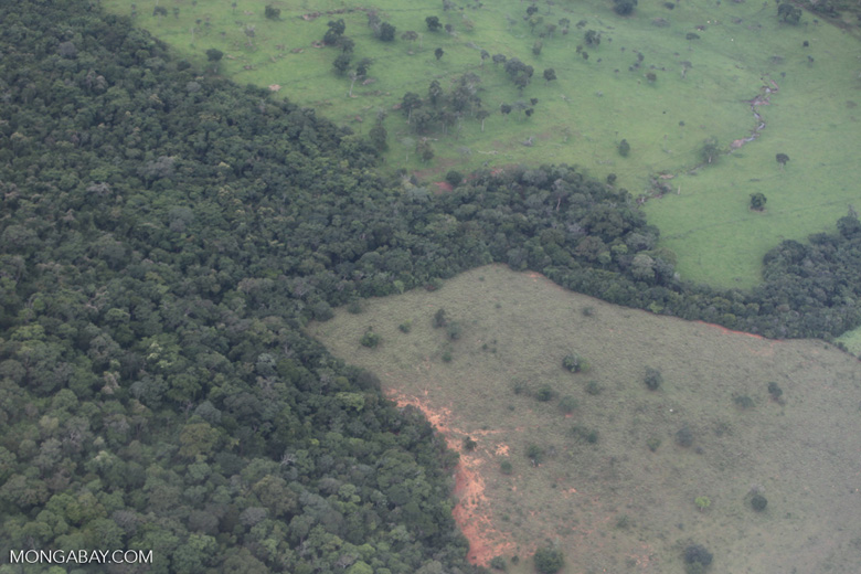 Clearing for ccattle pasture in the Xingu watershed