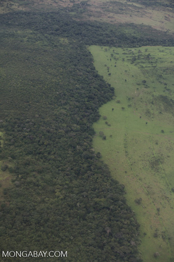 Forest degradation in the Amazon