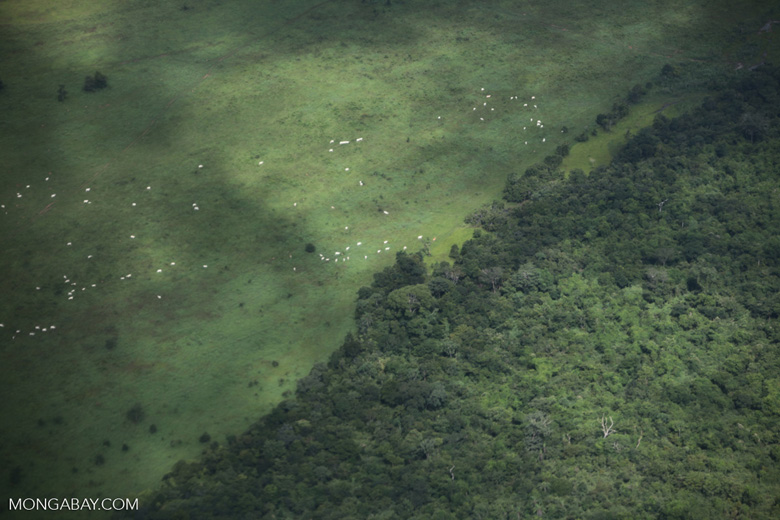 Cattle pasture and degraded forest