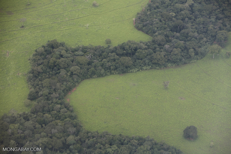 Amazon cattle pasture and forest