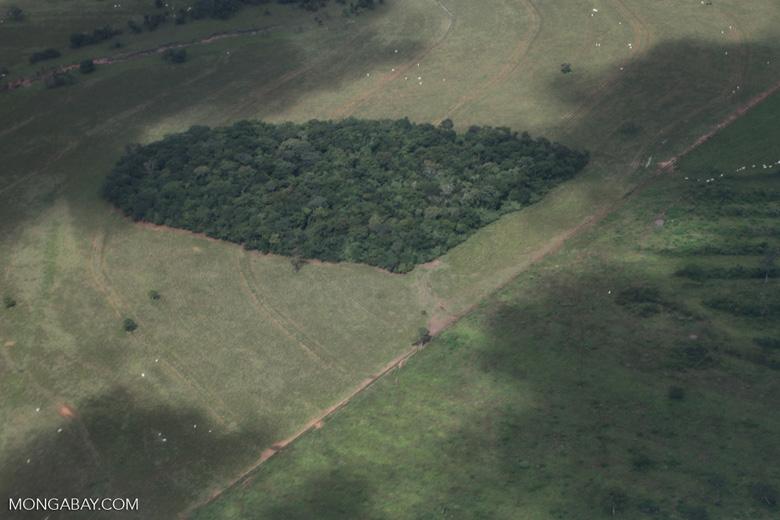 Amazon forest fragment