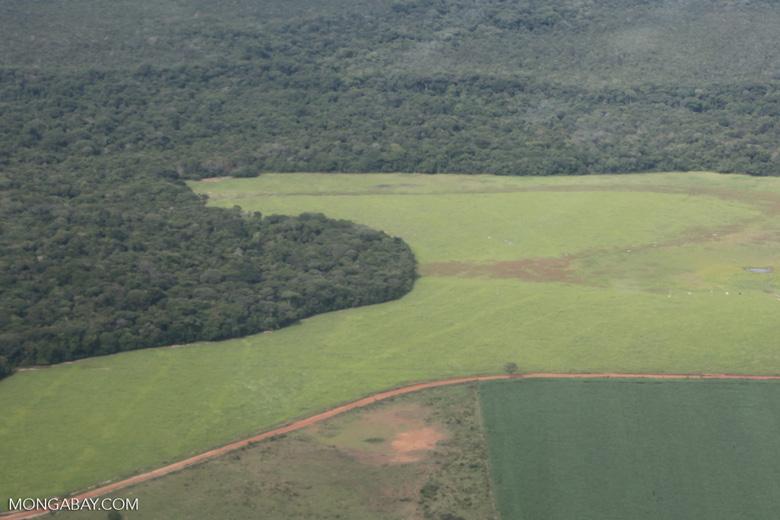 Amazon rainforest and cattle pasture [brazil_0501]