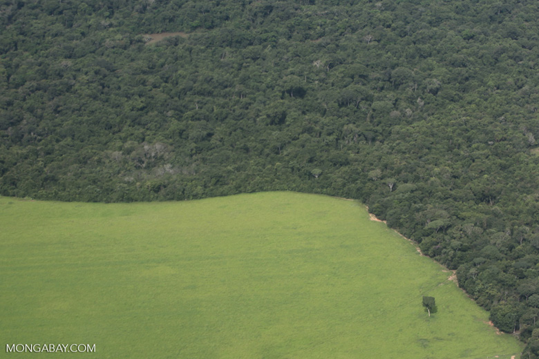 Amazon rainforest and cattle pasture [brazil_0505]