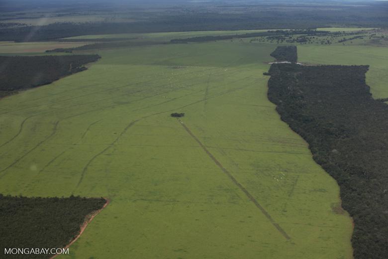 Amazon rainforest and cattle pasture [brazil_0509]